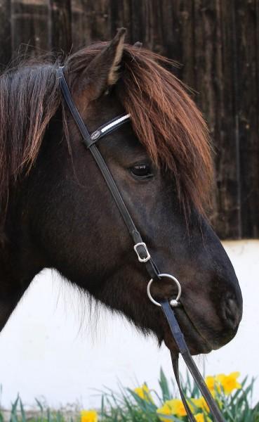 Kopfstück weiß geflochten Pferd.jpg