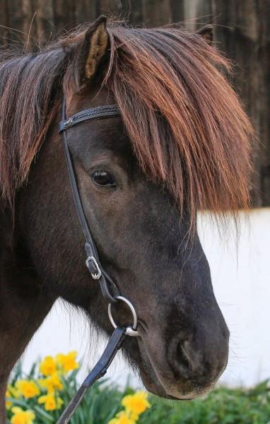 Kopfstück schwarz geflochten Pferd.jpg